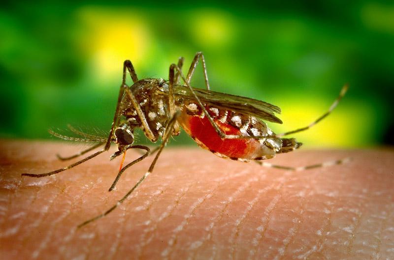 Sprawdzone sposoby na swędzenie po ugryzieniu komara!